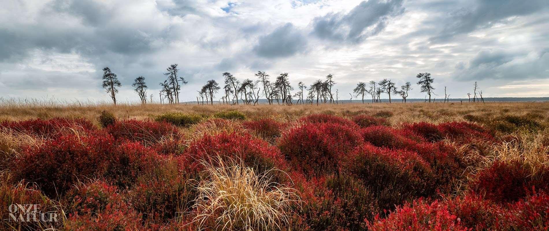 Volvo Car Belux en Onze Natuur ontdekken het wilde België